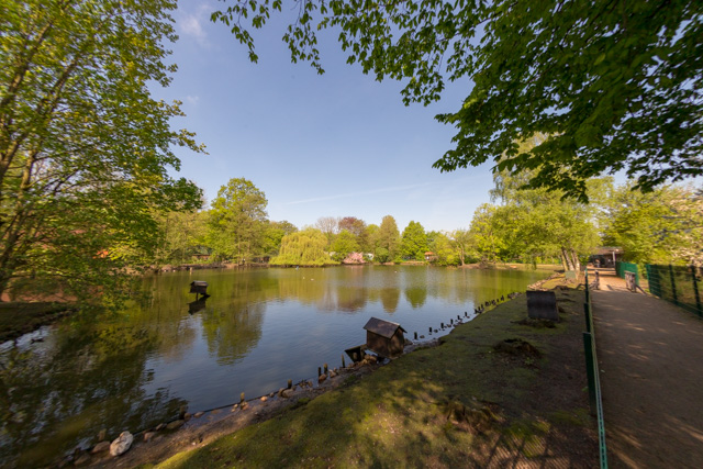 Blick über dem Teich