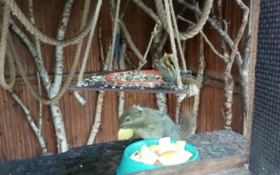 Große Aufregung bei den Baumhörnchen