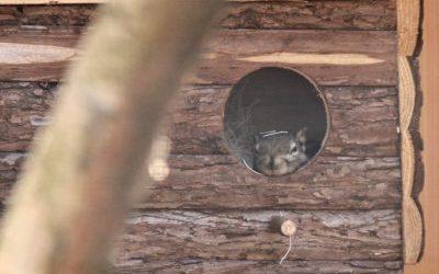 Unsere Streifenhörnchen sind umgezogen