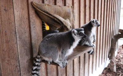 "Tierpark Petermoor sagt ""Danke"" – für viele Spenden in der Corona-Krise"