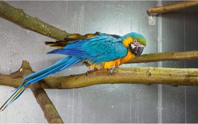 Es sind wieder Gelbbrustaras im Tierpark eingezogen